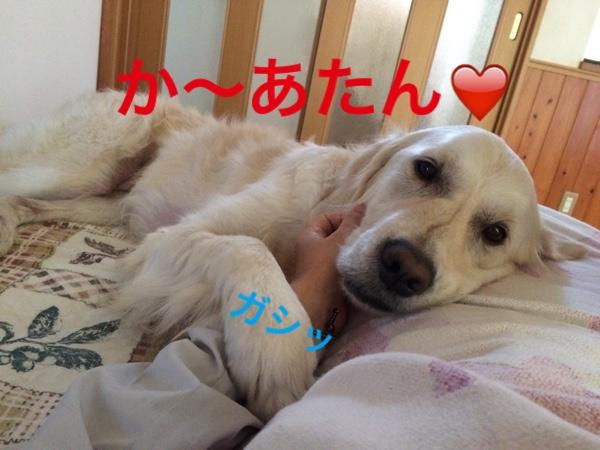 fc2blog_20150523100359011.jpg