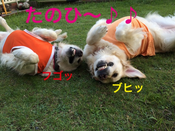 fc2blog_20150525222752914.jpg