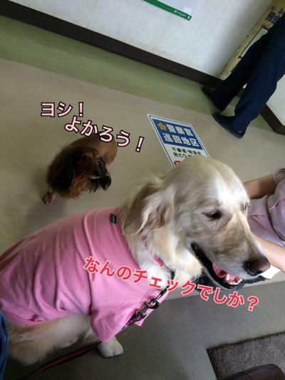 fc2blog_20150527222259129.jpg