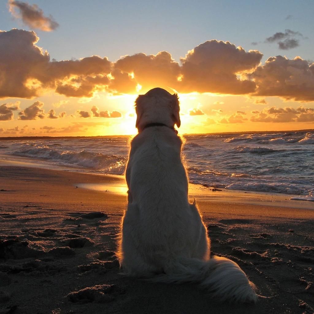 dog-watching-sunset-1024-1024-5449.jpg