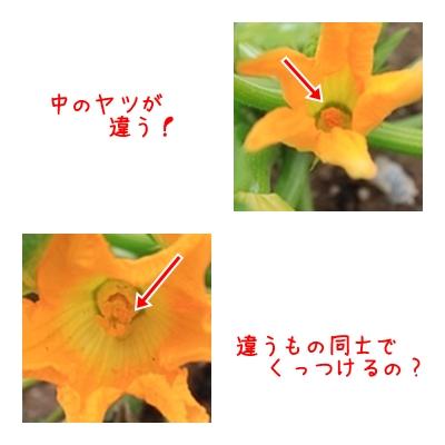 9_2015051810114744a.jpg