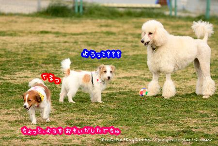 150225_dogrun4.jpg