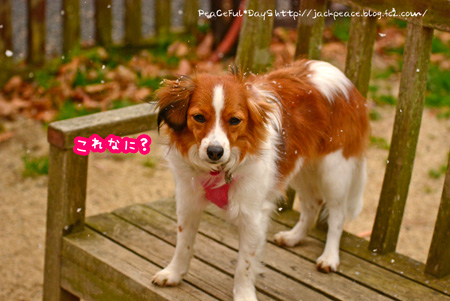 150310_yuasa10.jpg