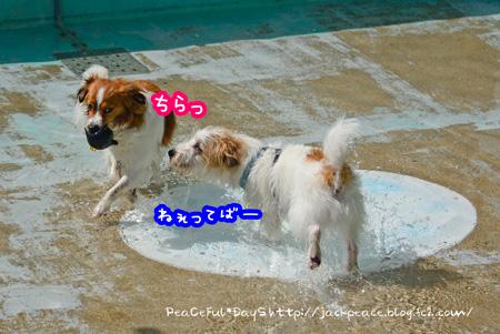 150417_pool.jpg