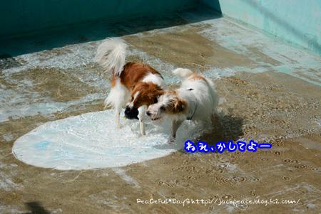 150417_pool1.jpg