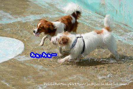 150417_pool2.jpg