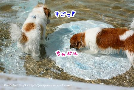 150417_pool8.jpg