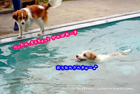 150428_pool2.jpg