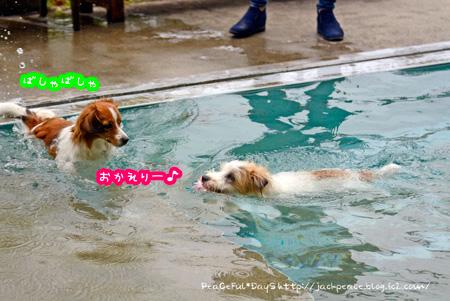 150428_pool3.jpg