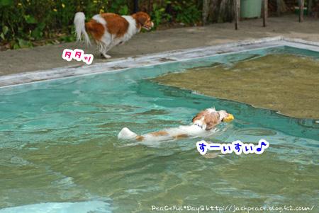 150514_pool1.jpg