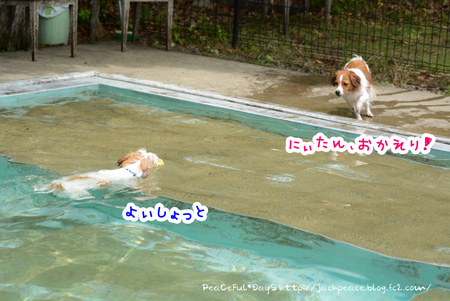 150514_pool2.jpg