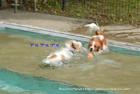 150514_pool3.jpg