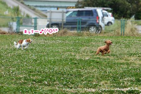 150518_kinokawa1.jpg
