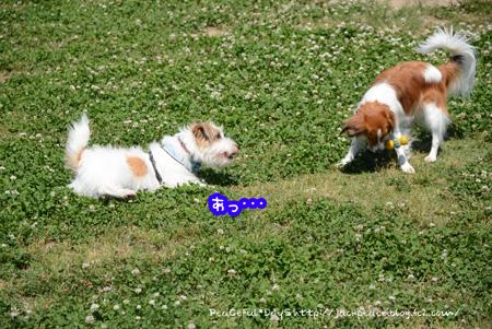 150521_dogrun2.jpg