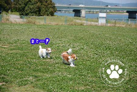 150521_dogrun3.jpg