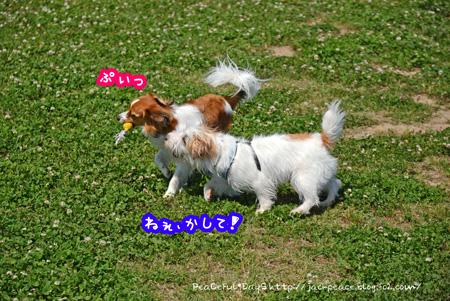 150521_dogrun5.jpg