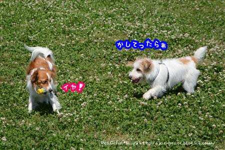150521_dogrun6.jpg