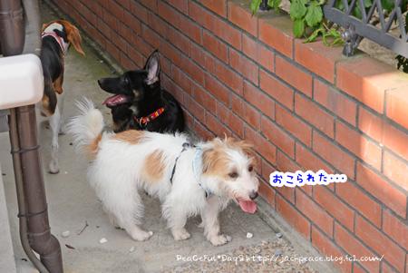 150529_niwa4.jpg
