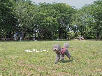 公園20150517-1