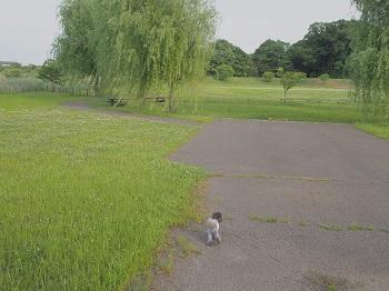 公園20150523-2