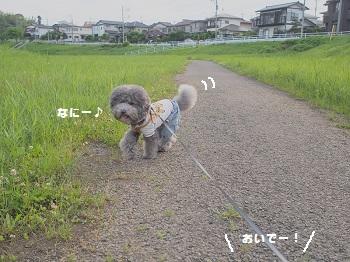 公園20150523-6
