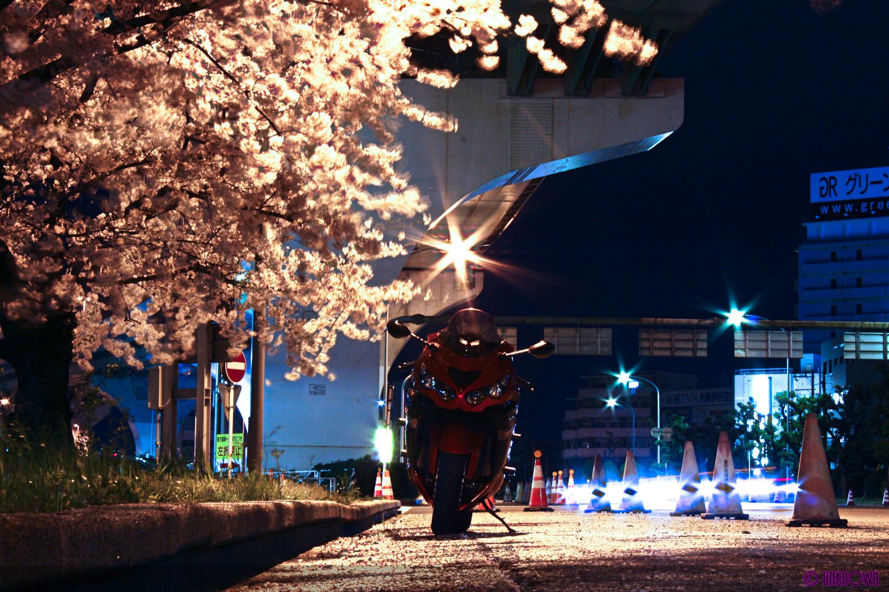 夜桜にまみれて
