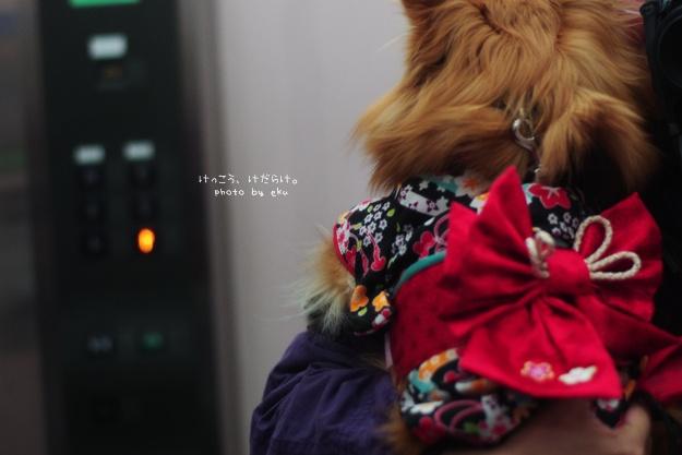 hatumode20150101.jpg
