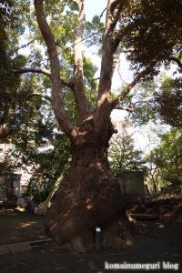 玉川神社(世田谷区等々力)45