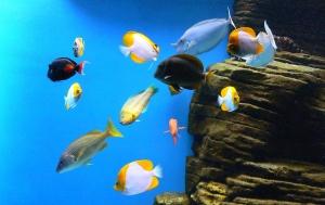 ワイキキ水族館の熱帯魚たち