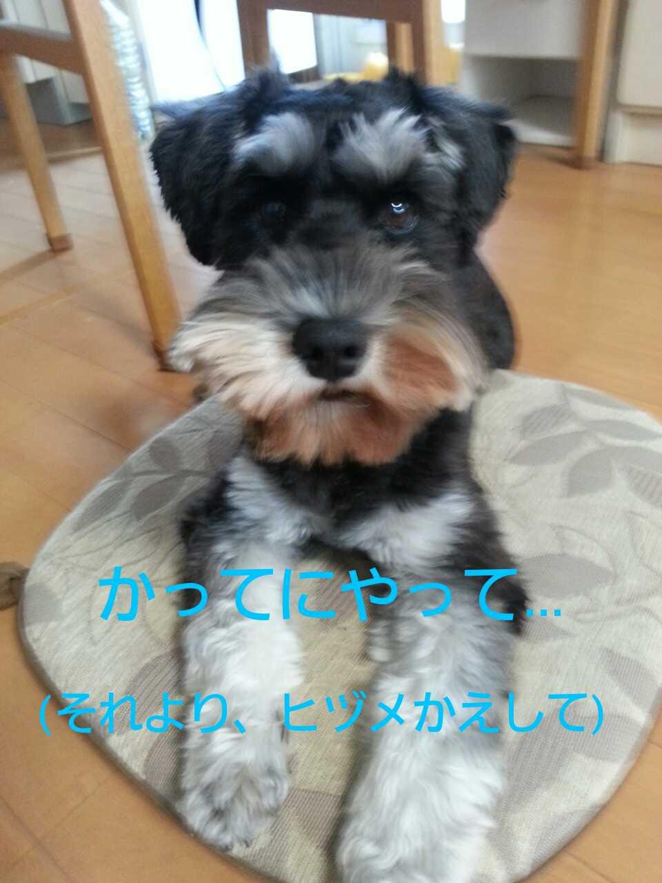 20141230130430732.jpg