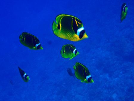 62415fish3.jpg