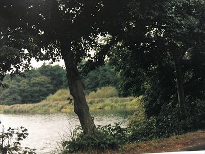 ジョージジェンセンの少年時代 湖岸の風景