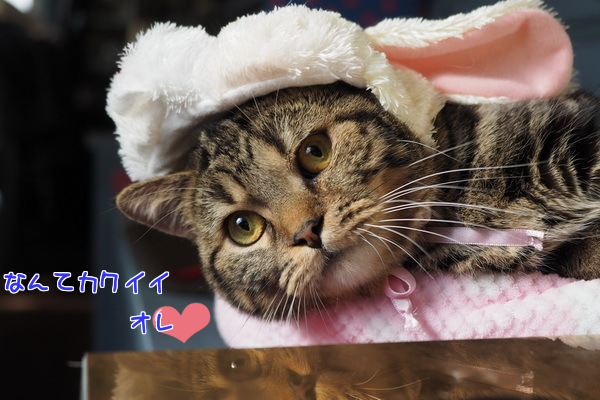 20150114104325a1c.png