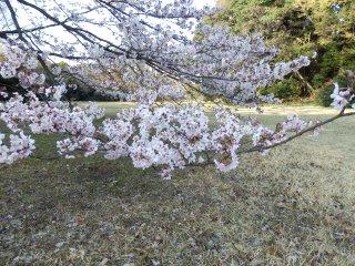 2015_04_03_P3300044.jpg