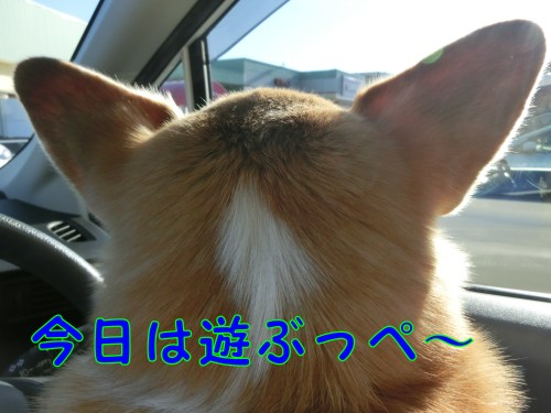 20150125_01.jpg
