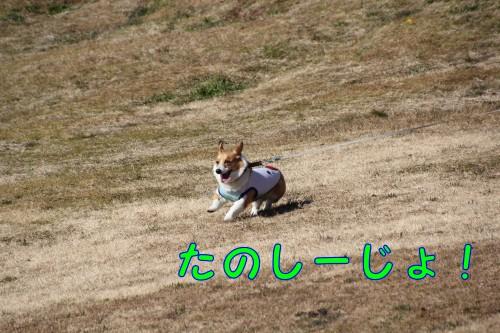 20150125_10.jpg