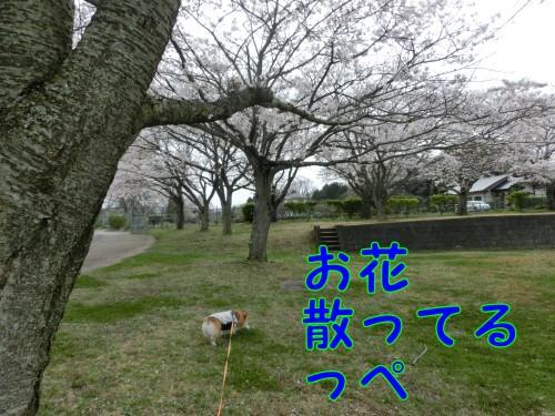 20150412_5.jpg
