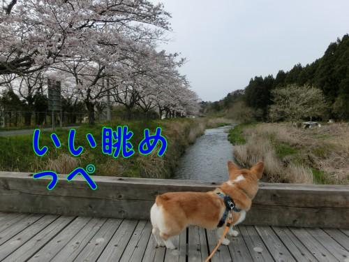 20150413_4.jpg