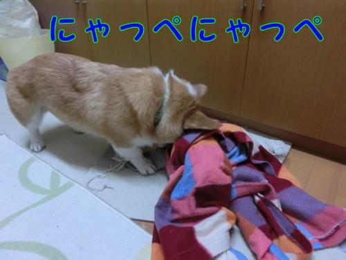 20150424_1.jpg