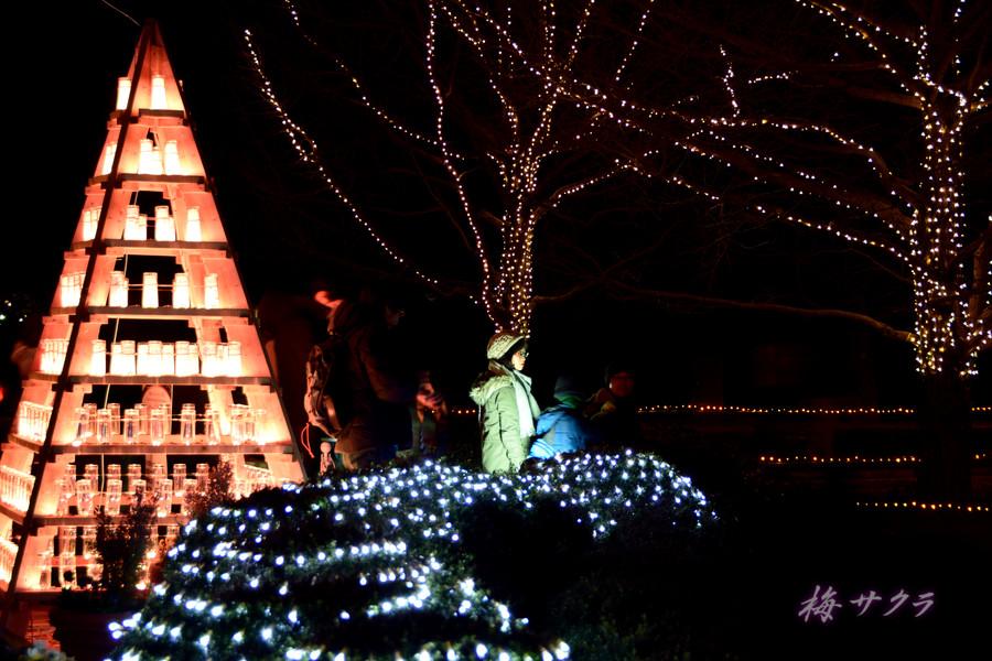 昭和記念公園のイルミ1(2)変更済