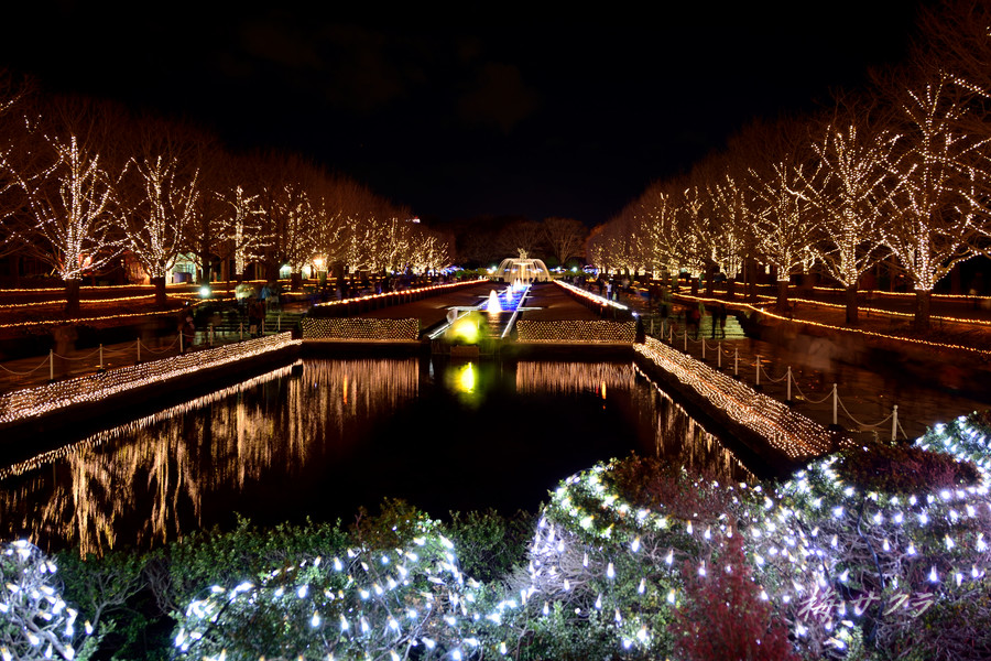 昭和記念公園のイルミ1(5)変更済