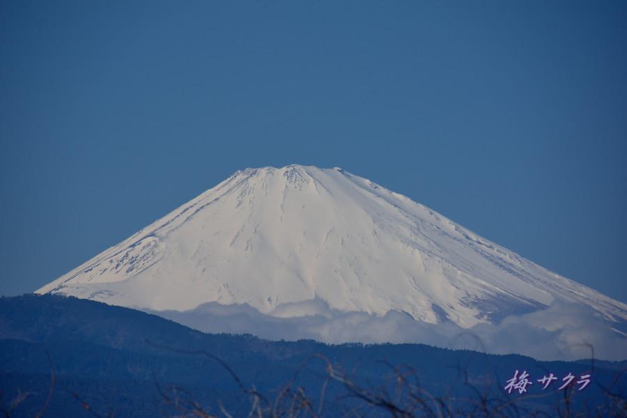 小田原・富士山3変更済