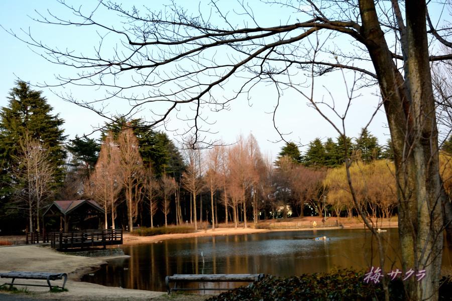 彩の森公園5変更済