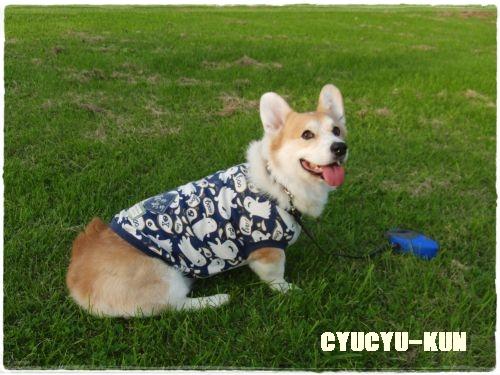cyucyu1.jpg
