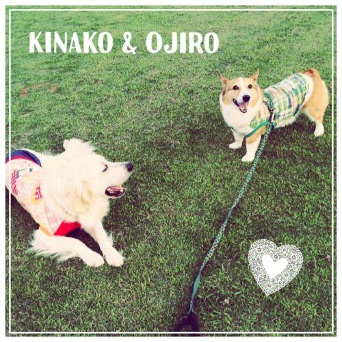 kinajiro1.jpg