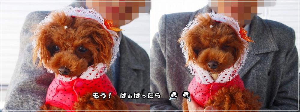 cats_20150323122654aef.jpg
