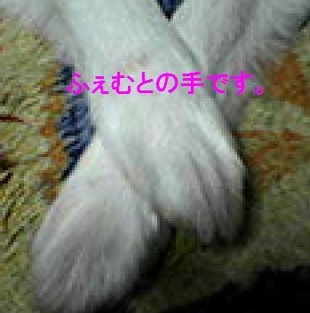 DSC_000005_20150219021354c98.jpg