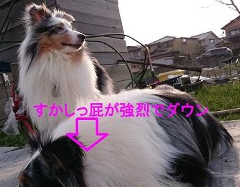 DSC_0284_20150401011229ae9.jpg
