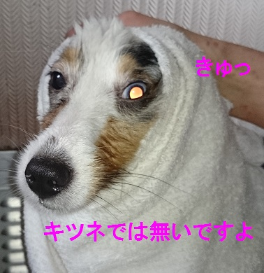DSC_6351.jpg