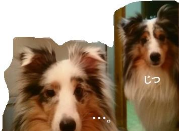 MOV_0803_000(5).jpg